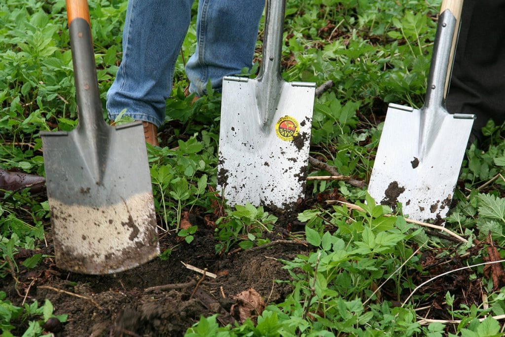 Three shovels preparing garden surrounded by weeds