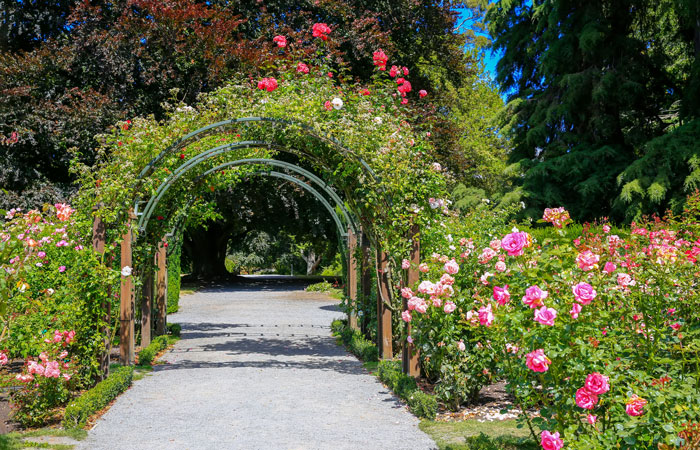 Beautiful rose garden design with archway over path